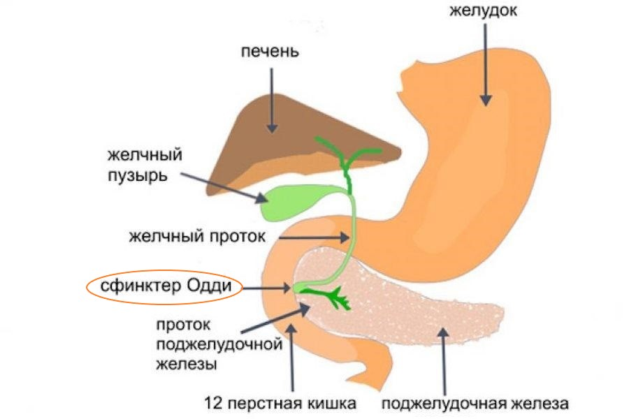 сфинктер одди1